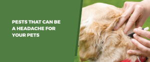 Pests That Can Be A Headache For Your Pets