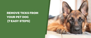 Remove Ticks From Your Pet Dog [7 Easy Steps]