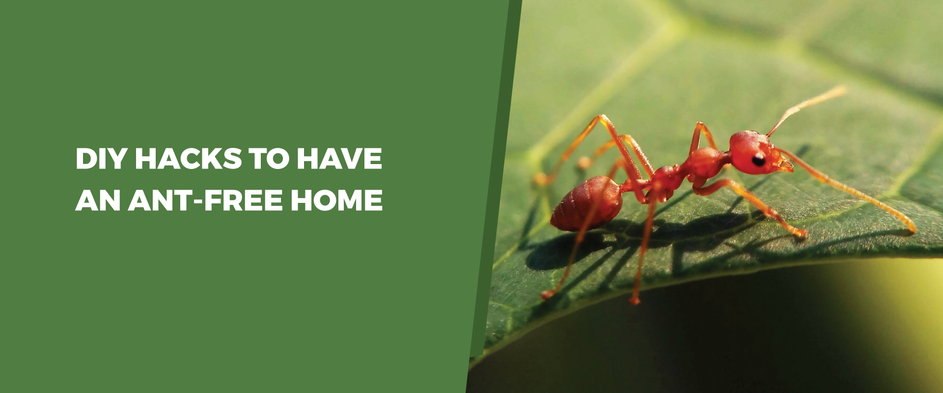 DIY Hacks To Have An Ant-Free Home